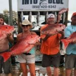 Red Snapper - 02