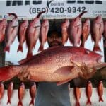 Red Snapper - 09